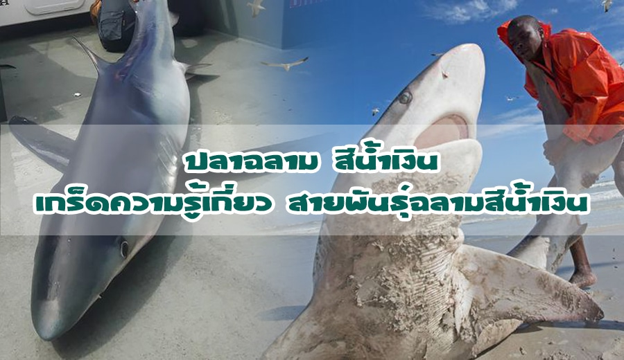 ปลาฉลาม
