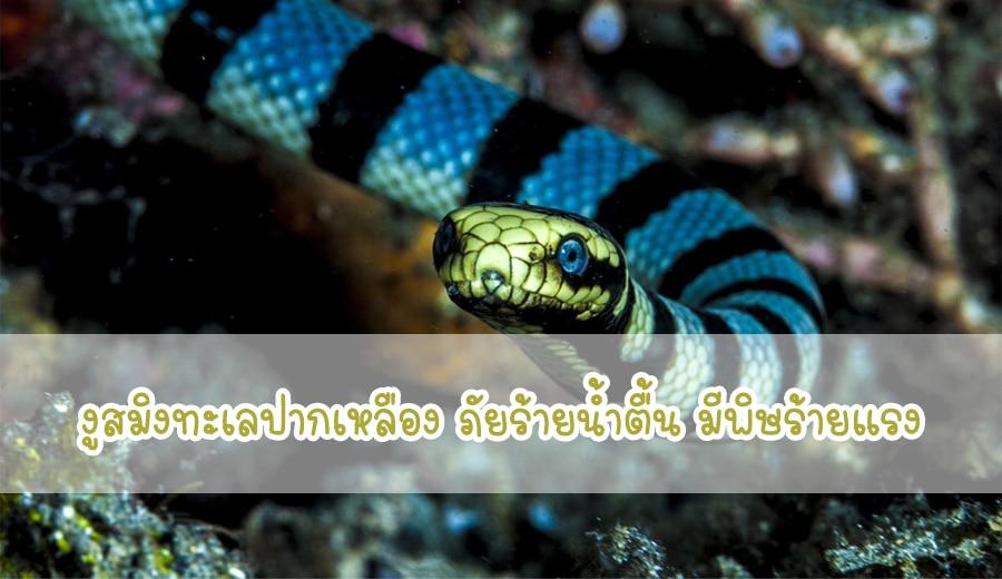 งูสมิงทะเลปากเหลือง